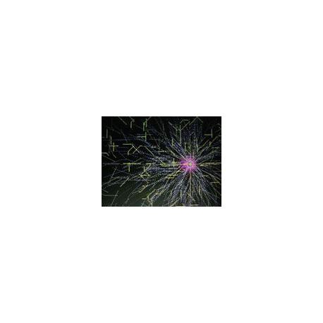 ameba krzyżówka